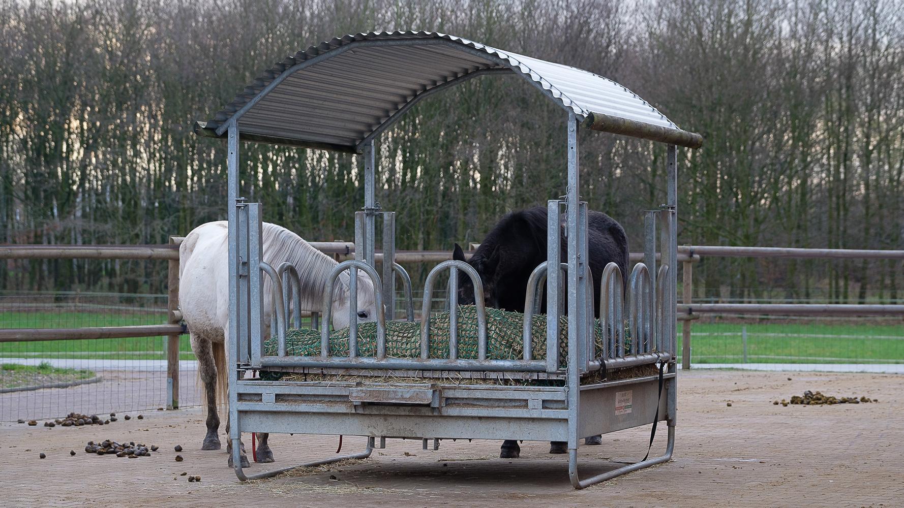 Pferde fressen Heu aus der Raufe. Foto: Ana Springfeldt, www.springfeldtprofifoto.com